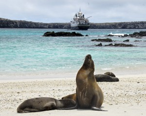 Sea lions amd ship